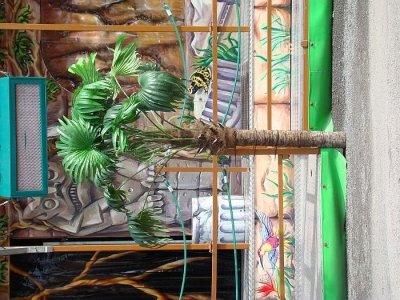 ai275.photobucket.com_albums_jj289_ThunderNrw_Amazonas_ama3.jpg