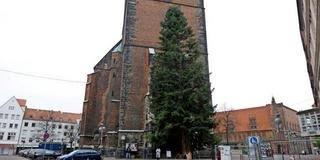 21-Meter-hoch-Hannovers-prominentester-Christbaum-ist-schon-da_mobile_default_2_1.jpg