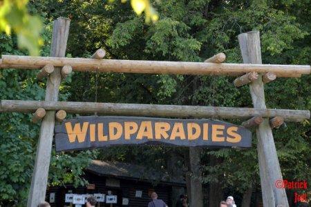 Wild (3).JPG